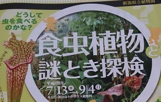食虫植物謎とき探検