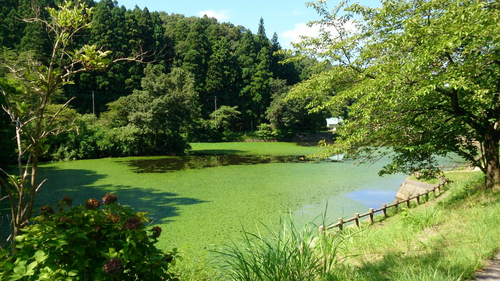 秋葉山公園池