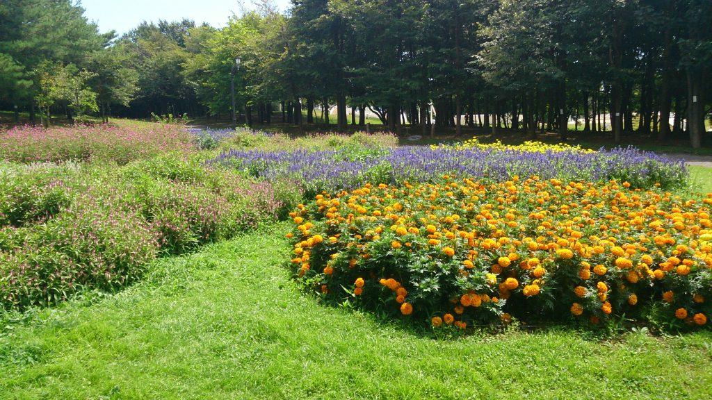 新潟県スポーツ公園花