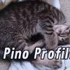 【you tube】猫(Pino)のProfire #1