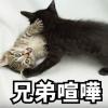 【you tube】猫(Pino Jr)の兄弟喧嘩 #2